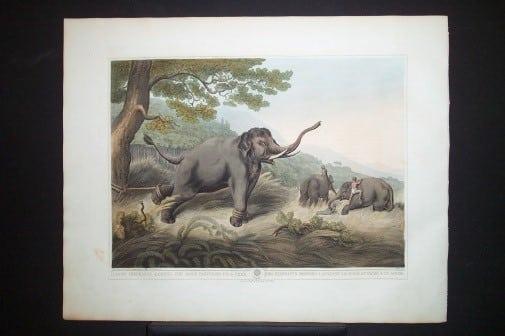 Captain Thomas Williamson, elephant, elephant art, endangered species, business art