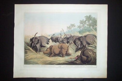 Captain Thomas Williamson, elephant art, endangered species, animal fight, business art