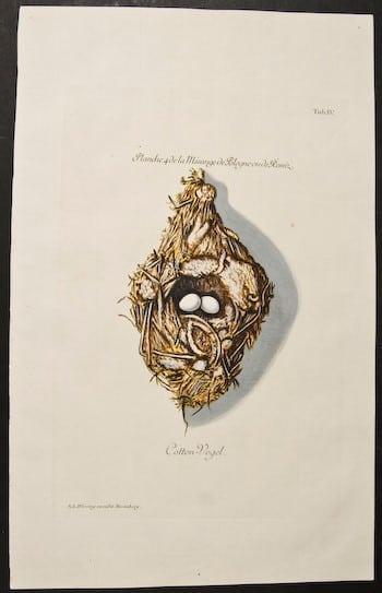 Adam Ludwig Wirsing, hanging nest, eggs in nest, nesting eggs, bird art, animal art, business art