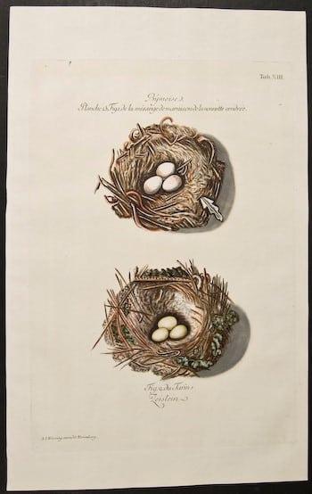 Adam Ludwig Wirsing, eggs in nest, nesting eggs, animal art, bird art, business art
