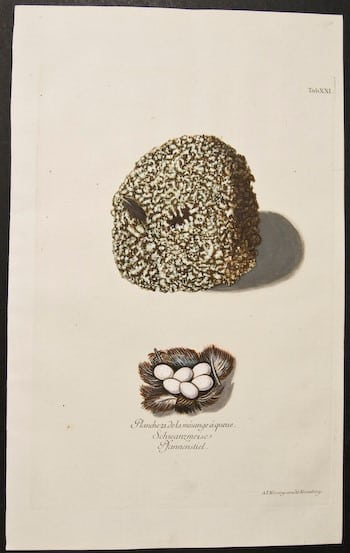 Adam Ludwig Wirsing, eggs in nest, clever nest, nesting eggs, bird art, animal art, business art
