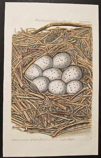 Adam Ludwig Wirsing, nesting eggs, eggs in nest, bird art, animal art, business art