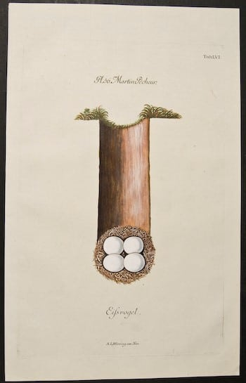 Adam Ludwig Wirsing, eggs in nest, nesting eggs, bird art, animal art, business art